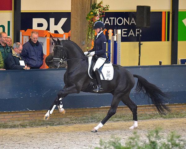 Stallion toto jr 06